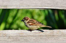 ptáček u krmítka